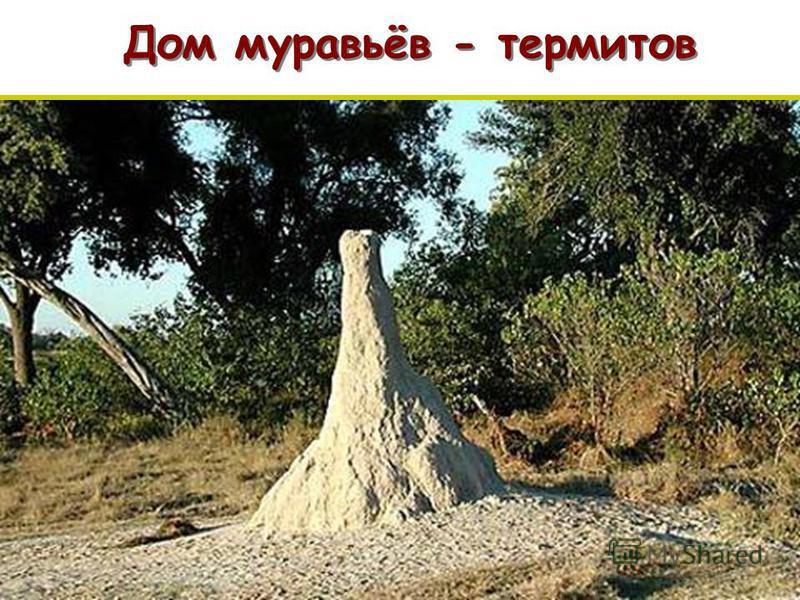 Дом муравьёв - термитов п п