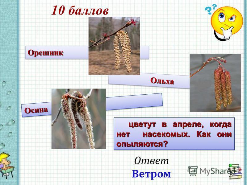 10 баллов Ответ Ветром Орешник Орешник Ольха Ольха Осина Осина цветут в апреле, когда нет насекомых. Как они опыляются?