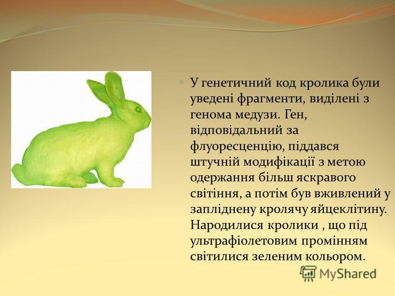 У генетичний код кролика були уведені фрагменти, виділені з генома медузи. Ген, відповідальний за флуоресценцію, піддався штучній модифікації з метою одержання більш яскравого світіння, а потім був вживлений у запліднену кролячу яйцеклітину. Народили