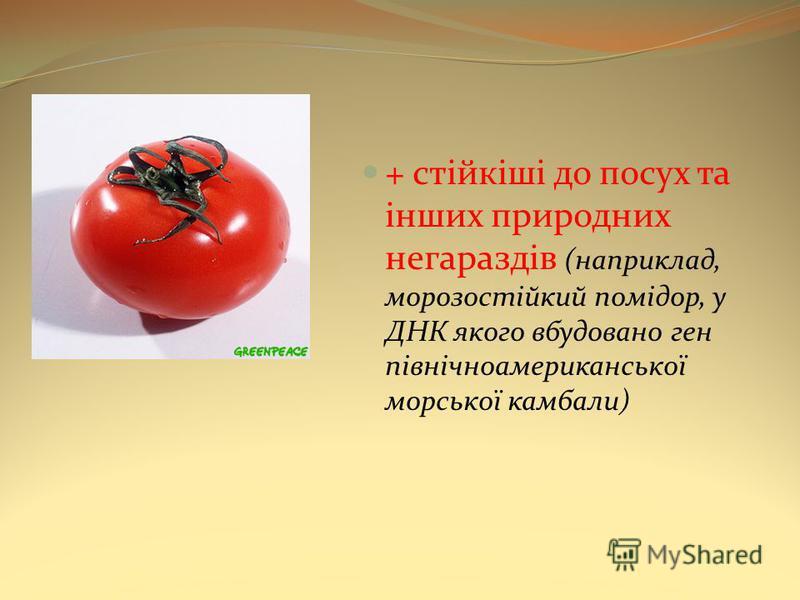 + стійкіші до посух та інших природних негараздів (наприклад, морозостійкий помідор, у ДНК якого вбудовано ген північноамериканської морської камбали)