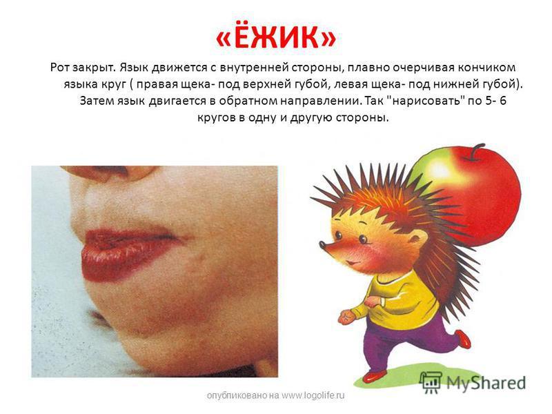 «ЁЖИК» Рот закрыт. Язык движется с внутренней стороны, плавно очерчивая кончиком языка круг ( правая щека- под верхней губой, левая щека- под нижней губой). Затем язык двигается в обратном направлении. Так