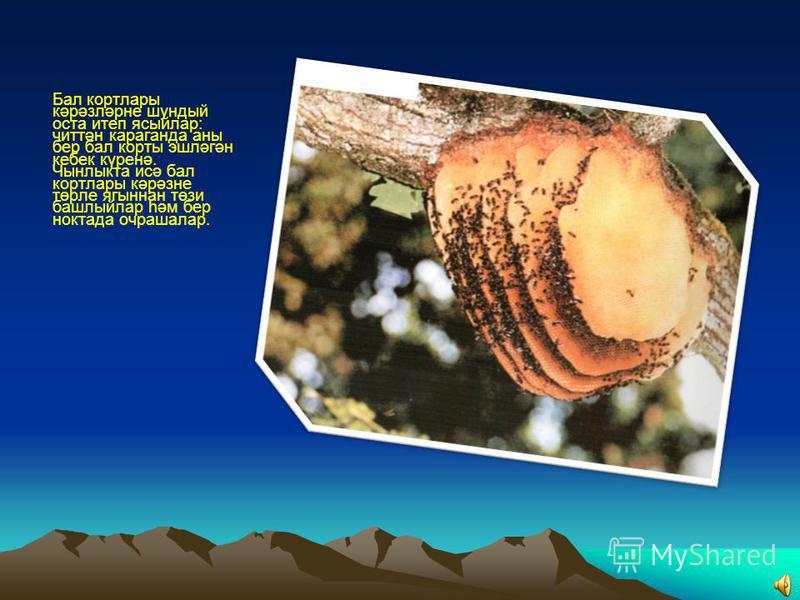 Бал корты түгәрәк ясаса, нектар якында гына, түгәрәк икегә аерылса, азыкны ерактан эзлә.