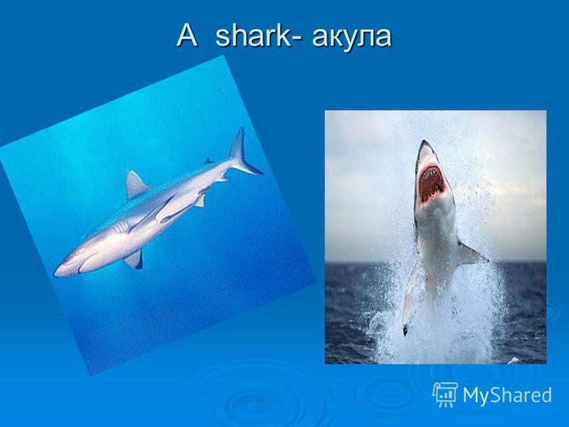 A shark- акула