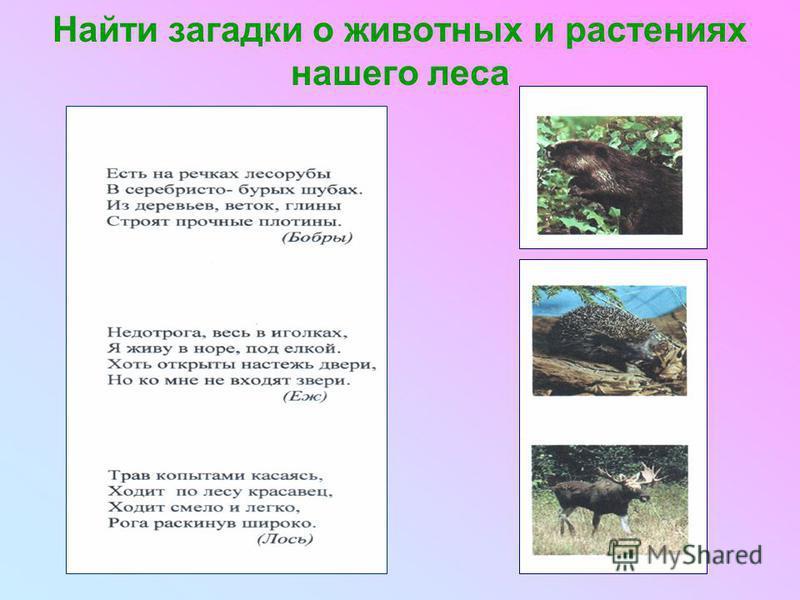 Найти загадки о животных и растениях нашего леса