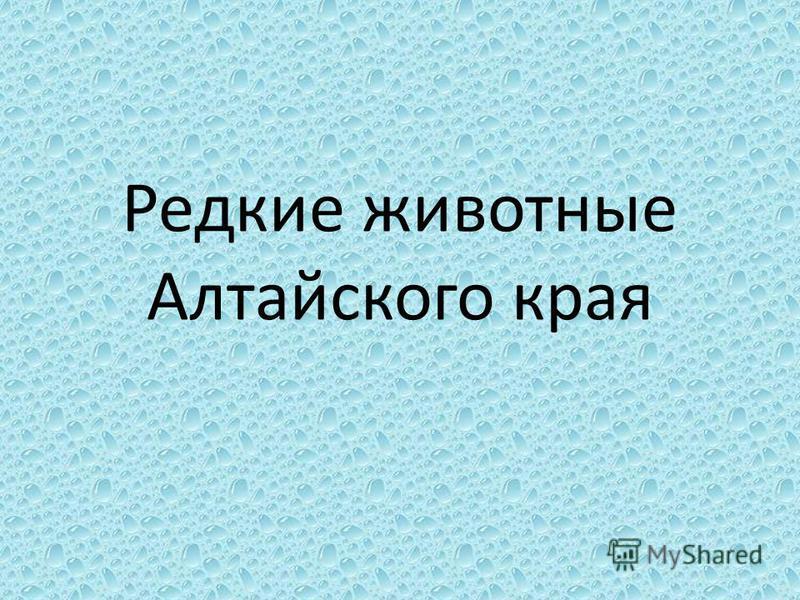 Редкие животные Алтайского края
