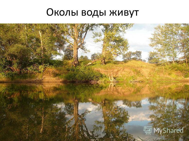 Околы воды живут