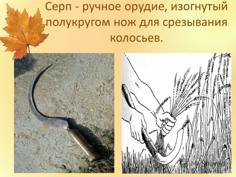 Серп - ручное орудие, изогнутый полукругом нож для срезывания колосьев.