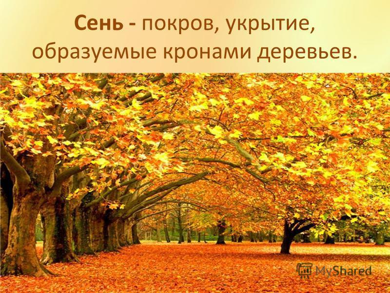 Сень - покров, укрытие, образуемые кронами деревьев.
