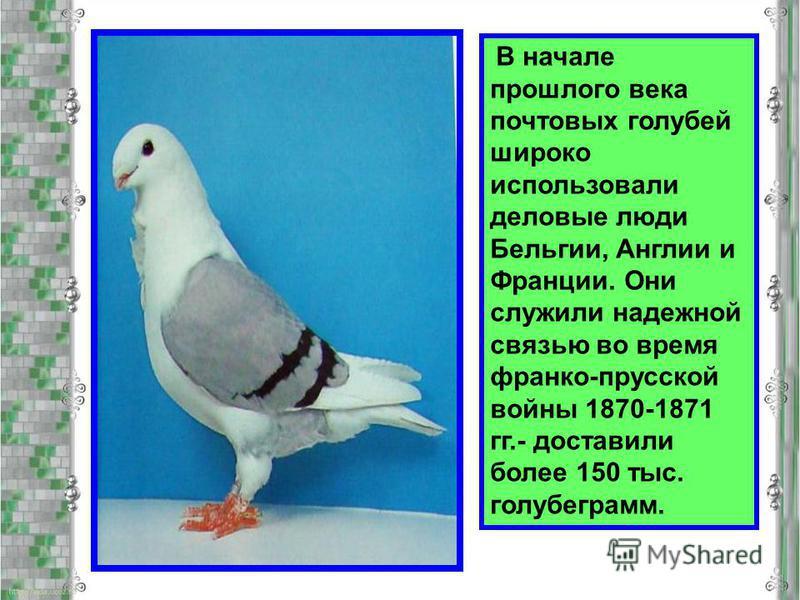 В начале прошлого века почтовых голубей широко использовали деловые люди Бельгии, Англии и Франции. Они служили надежной связью во время франко-прусской войны 1870-1871 гг.- доставили более 150 тыс. голубе грамм.