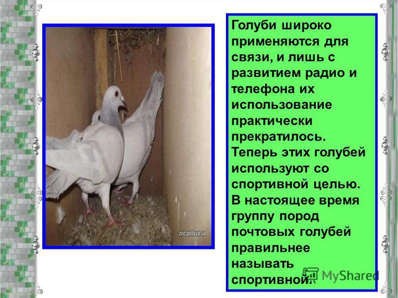 Голуби широко применяются для связи, и лишь с развитием радио и телефона их использование практически прекратилось. Теперь этих голубей используют со спортивной целью. В настоящее время группу пород почтовых голубей правильнее называть спортивной.
