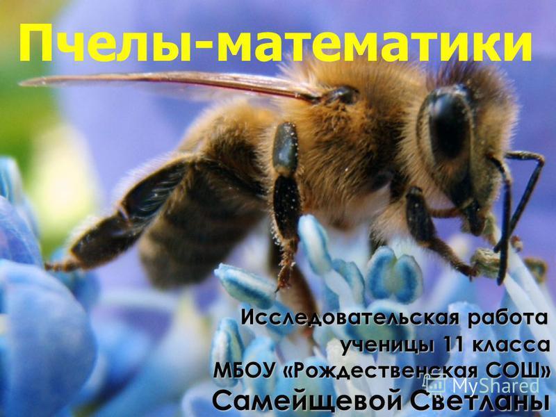 Исследовательская работа Исследовательская работа ученицы 11 класса ученицы 11 класса МБОУ «Рождественская СОШ» МБОУ «Рождественская СОШ» Самейщевой Светланы Пчелы-математики