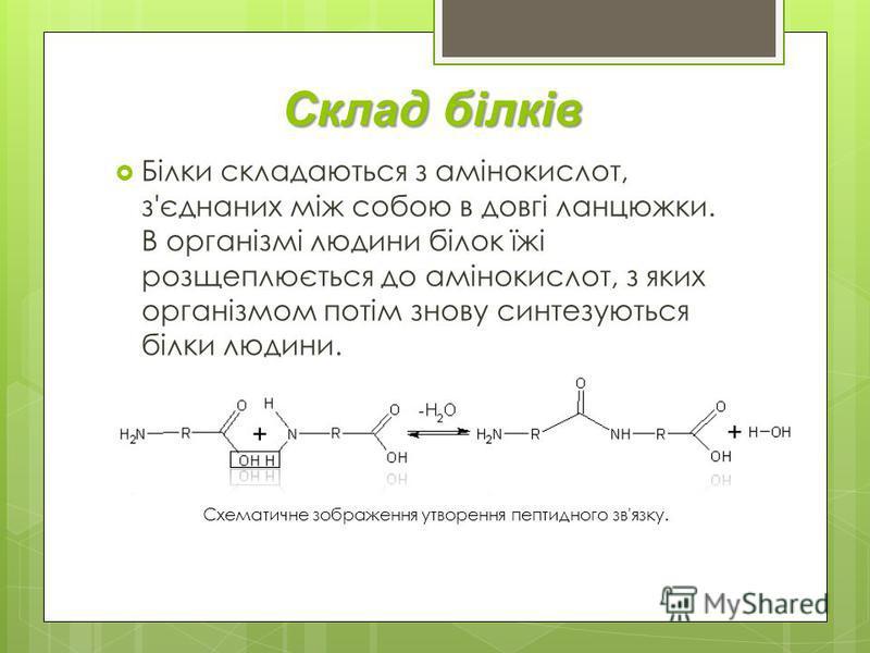 Склад білків Білки складаються з амінокислот, з'єднаних між собою в довгі ланцюжки. В організмі людини білок їжі розщеплюється до амінокислот, з яких організмом потім знову синтезуються білки людини. Схематичне зображення утворення пептидного зв'язку