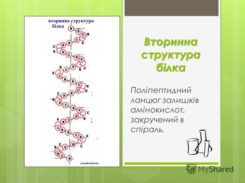 Вторинна структура білка Поліпептидний ланцюг залишків амінокислот, закручений в спіраль.