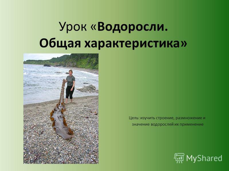 Урок «Водоросли. Общая характеристика» Цель: изучить строение, размножение и значение водорослей их применение