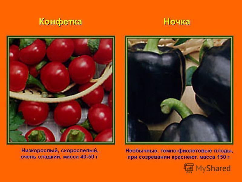 Конфетка Низкорослый, скороспелый, очень сладкий, масса 40-50 г Ночка Необычные, темно-фиолетовые плоды, при созревании краснеют, масса 150 г