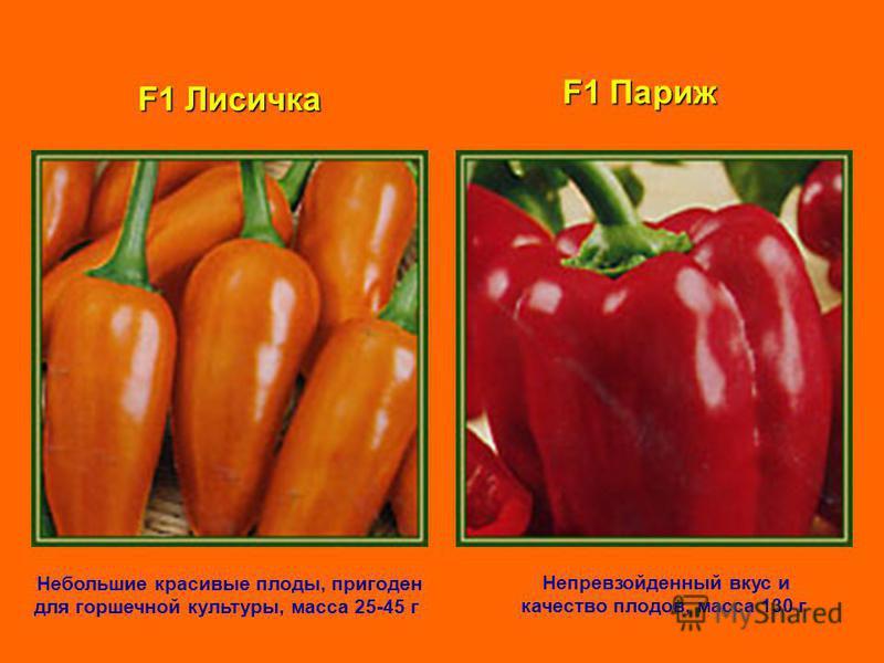 F1 Лисичка Небольшие красивые плоды, пригоден для горшечной культуры, масса 25-45 г F1 Париж Непревзойденный вкус и качество плодов, масса 130 г