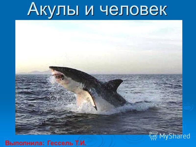 Акулы и человек Выполнила: Гессель Т.И.