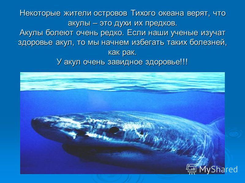 Некоторые жители островов Тихого океана верят, что акулы – это духи их предков. Акулы болеют очень редко. Если наши ученые изучат здоровье акул, то мы начнем избегать таких болезней, как рак. У акул очень завидное здоровье!!!