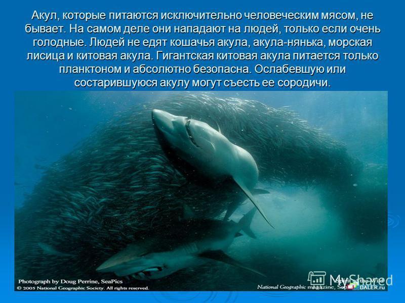 Акул, которые питаются исключительно человеческим мясом, не бывает. На самом деле они нападают на людей, только если очень голодные. Людей не едят кошачья акула, акула-нянька, морская лисица и китовая акула. Гигантская китовая акула питается только п