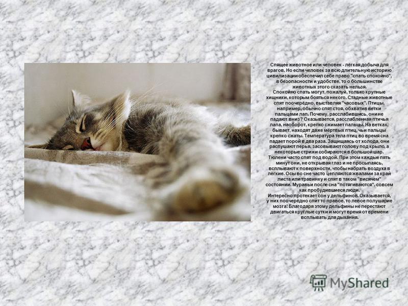 Сновидения Спящее животное или человек - лёгкая добыча для врагов. Но если человек за всю длительную историю цивилизации обеспечил себе право
