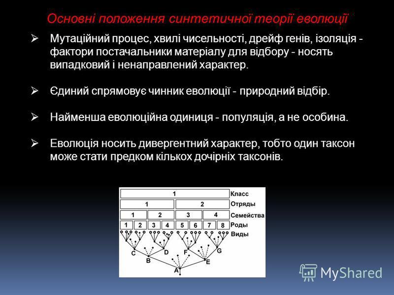 Основні положення синтетичної теорії еволюції Мутаційний процес, хвилі чисельності, дрейф генів, ізоляція - фактори постачальники матеріалу для відбору - носять випадковий і ненаправлений характер. Єдиний спрямовує чинник еволюції - природний відбір.