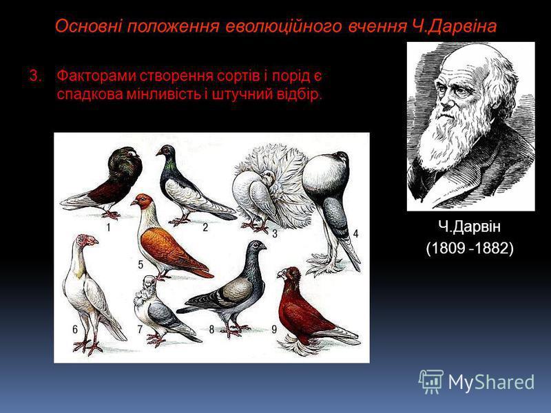 Основні положення еволюційного вчення Ч.Дарвіна Ч.Дарвін (1809 -1882) 3.Факторами створення сортів і порід є спадкова мінливість і штучний відбір.