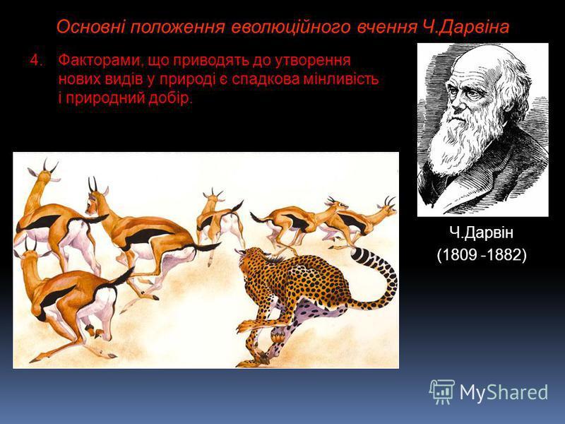 Основні положення еволюційного вчення Ч.Дарвіна Ч.Дарвін (1809 -1882) 4.Факторами, що приводять до утворення нових видів у природі є спадкова мінливість і природний добір.