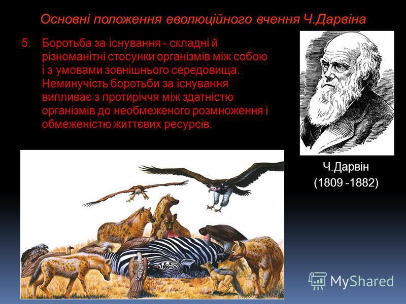 Основні положення еволюційного вчення Ч.Дарвіна Ч.Дарвін (1809 -1882) 5.Боротьба за існування - складні й різноманітні стосунки організмів між собою і з умовами зовнішнього середовища. Неминучість боротьби за існування випливає з протиріччя між здатн
