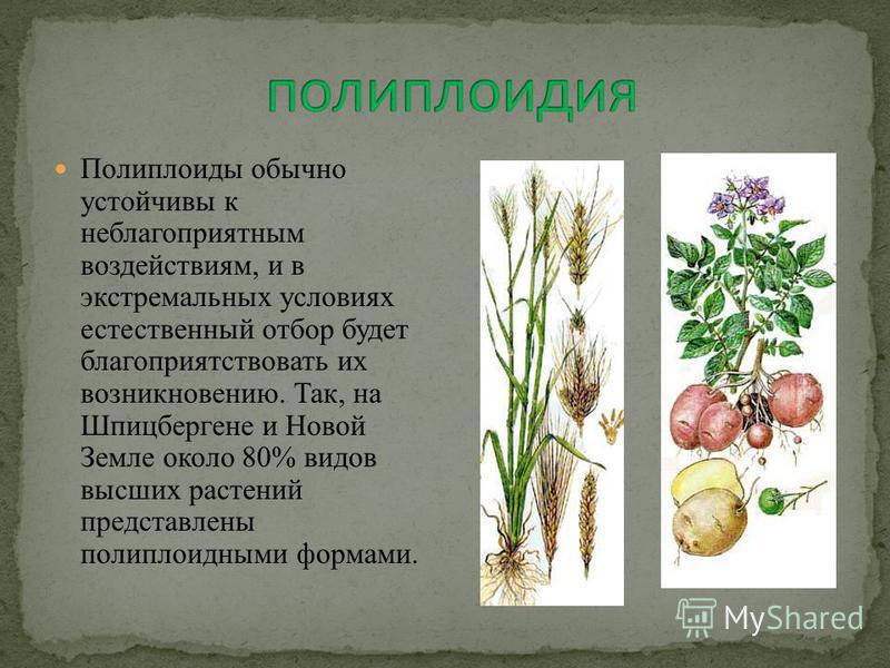 Полиплоиды обычно устойчивы к неблагоприятным воздействиям, и в экстремальных условиях естественный отбор будет благоприятствовать их возникновению. Так, на Шпицбергене и Новой Земле около 80% видов высших растений представлены полиплоидными формами.