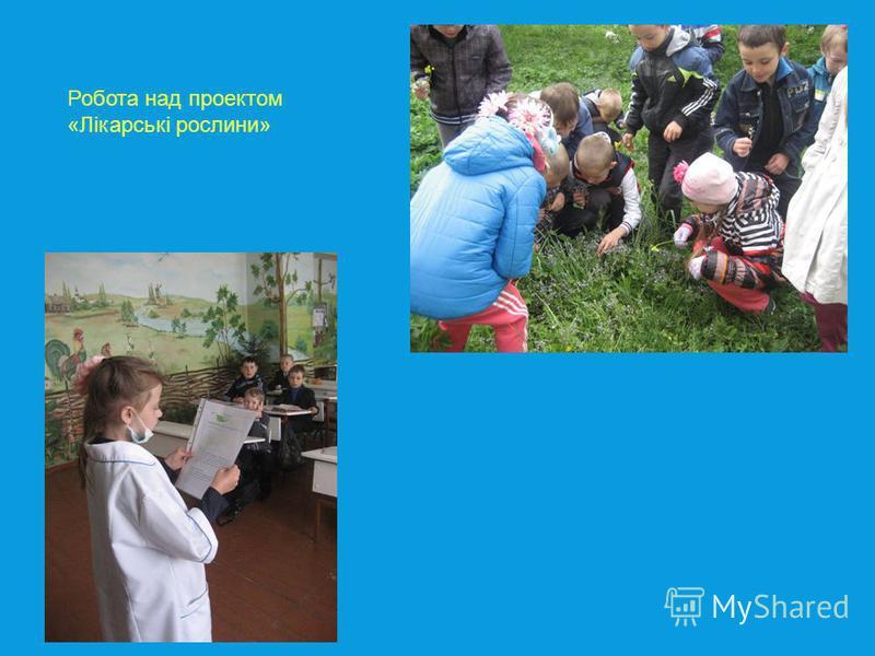Робота над проектом «Лікарські рослини»
