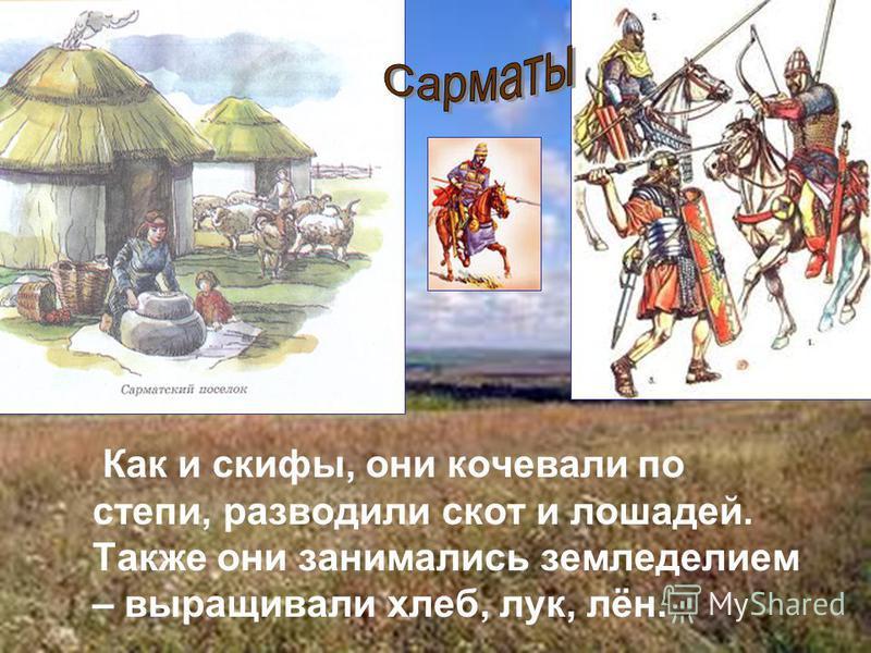 Как и скифы, они кочевали по степи, разводили скот и лошадей. Также они занимались земледелием – выращивали хлеб, лук, лён.