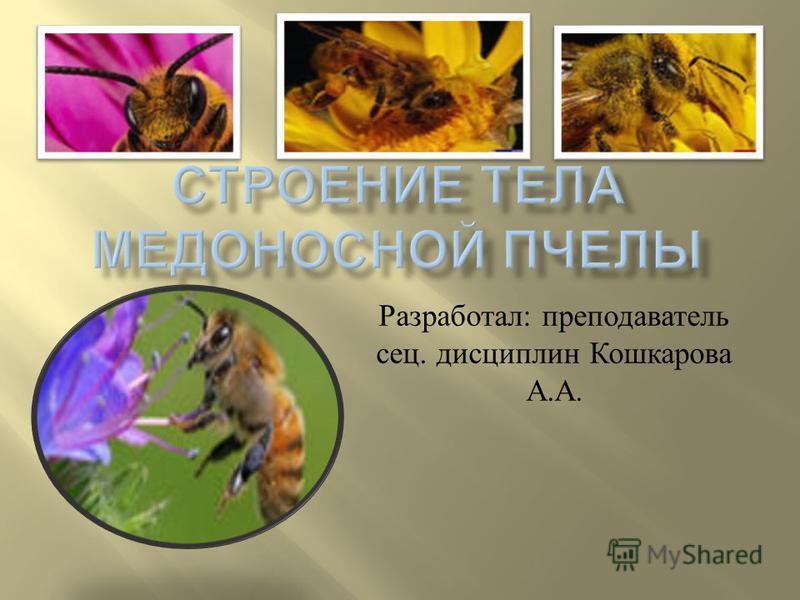 Разработал : преподаватель спец. дисциплин Кошкарова А. А.