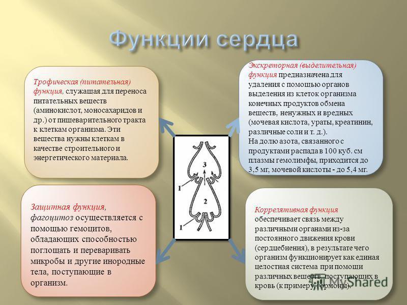 Коррелятивная функция обеспечивает связь между различными органами из-за постоянного движения крови (сердцебиения), в результате чего организм функционирует как единая целостная система при помощи различных веществ, поступающих в кровь (к примеру, го