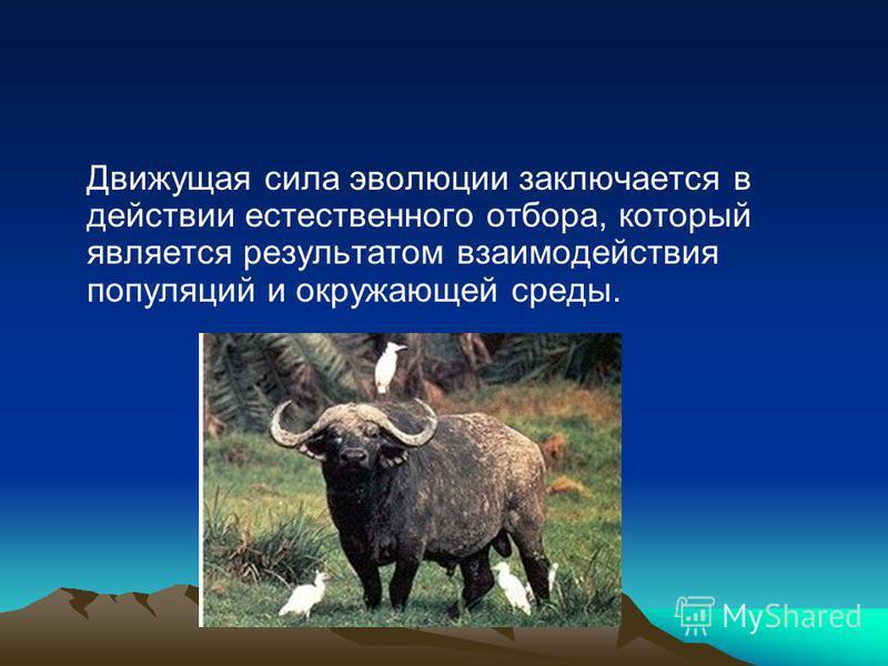 Движущая сила эволюции заключается в действии естественного отбора, который является результатом взаимодействия популяций и окружающей среды.