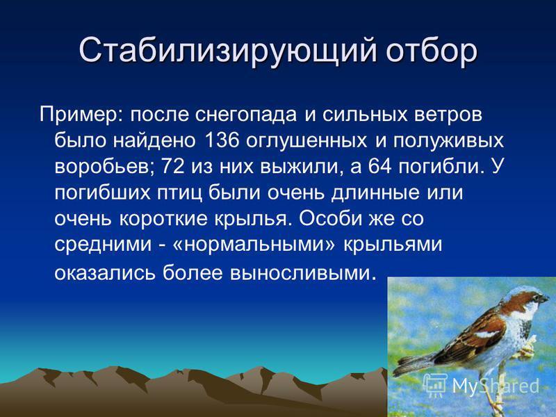Стабилизирующий отбор Пример: после снегопада и сильных ветров было найдено 136 оглушенных и полуживых воробьев; 72 из них выжили, а 64 погибли. У погибших птиц были очень длинные или очень короткие крылья. Особи же со средними - «нормальными» крылья