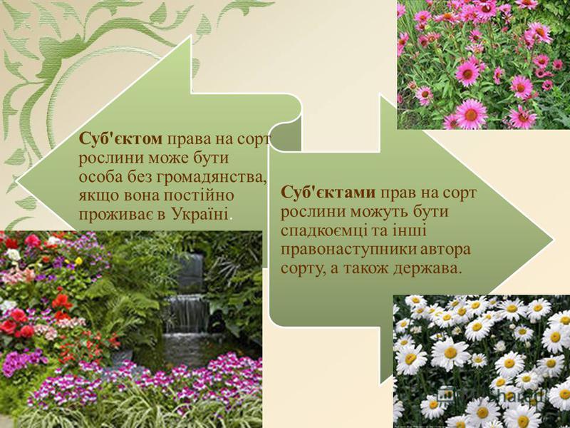 Суб'єктом права на сорт рослини може бути особа без громадянства, якщо вона постійно проживає в Україні. Суб'єктами прав на сорт рослини можуть бути спадкоємці та інші правонаступники автора сорту, а також держава.