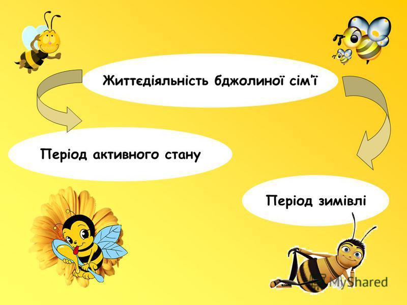 Життєдіяльність бджолиної сімї Період зимівлі Період активного стану