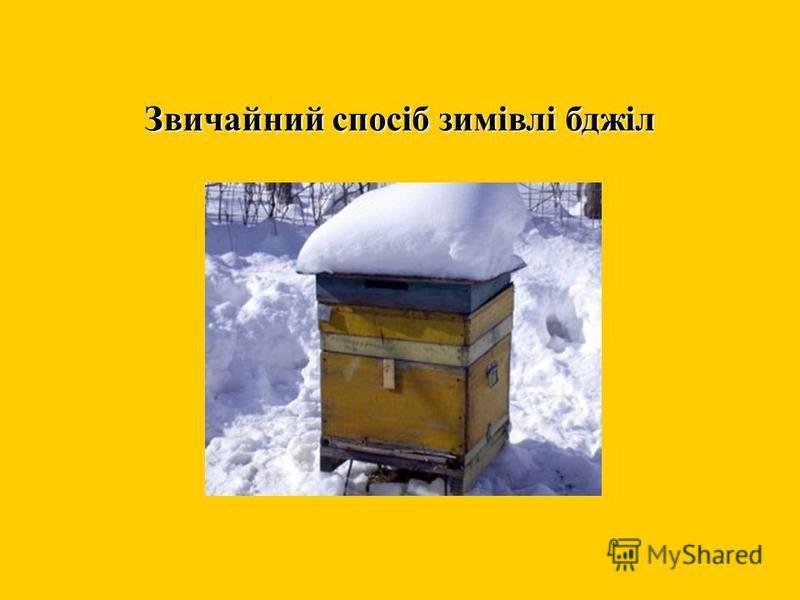 Звичайний спосіб зимівлі бджіл