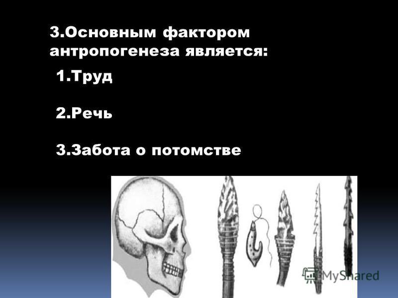 3. Основным фактором антропогенеза является: 1. Труд 2. Речь 3. Забота о потомстве