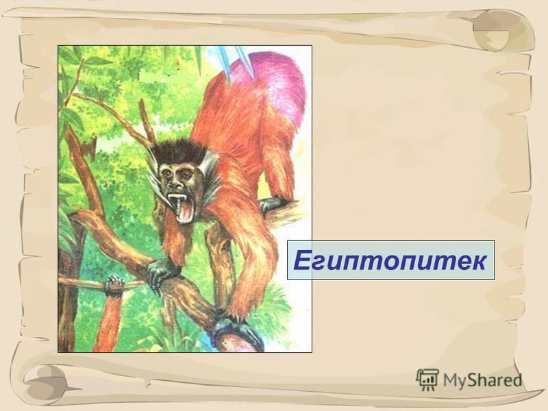 5 Иң беренче примат – плезиадапис (65 млн. ел элек)