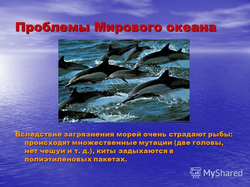 Проблемы Мирового океана Вследствие загрязнения морей очень страдают рыбы: происходят множественные мутации (две головы, нет чешуи и т. д.), киты задыхаются в полиэтиленовых пакетах.