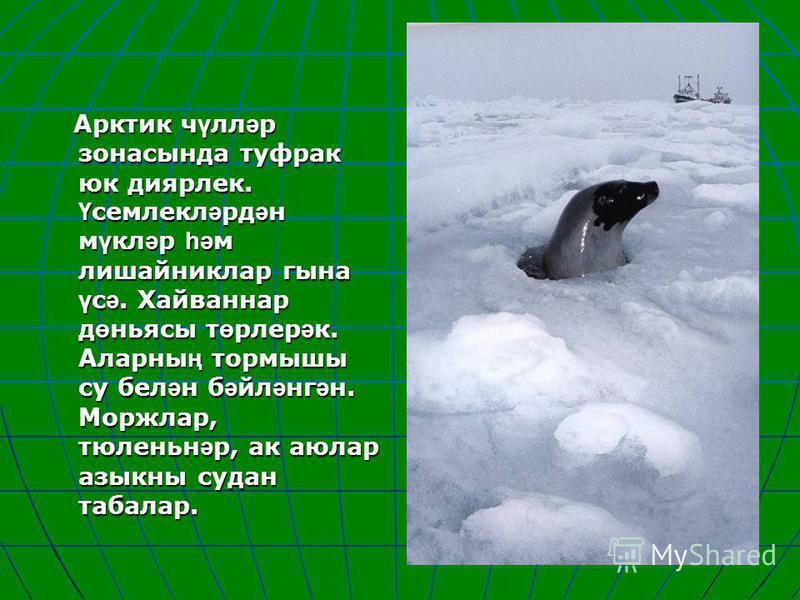 Арктик ч ү лл ә р зонасында туфрак юк диярлек. Ү семлекл ә рд ә н м ү кл ә р һә м лишайниклар гына ү с ә. Хайваннар д ө ньясы т ө рлер ә к. Аларны ң тормышы су бел ә н б ә йл ә нг ә н. Моржлар, тюленьн ә р, ак аюлар азыкны судан табалар. Арктик ч ү л