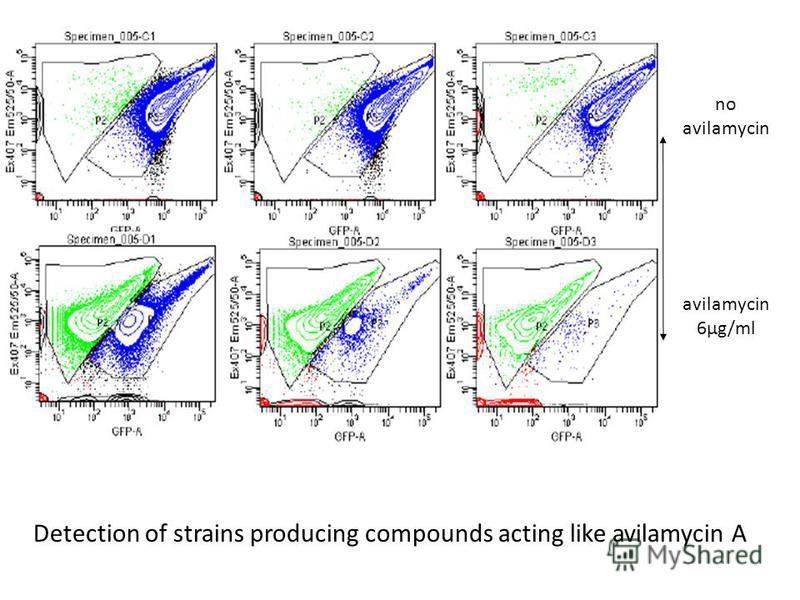 no avilamycin 6µg/ml Detection of strains producing compounds acting like avilamycin A