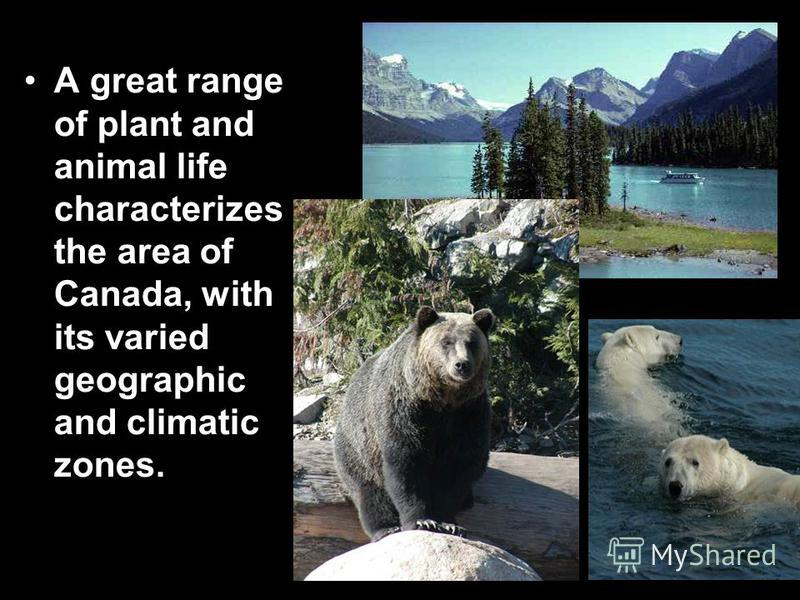 A great range of plant and animal life characterizes the area of Canada, with its varied geographic and climatic zones.