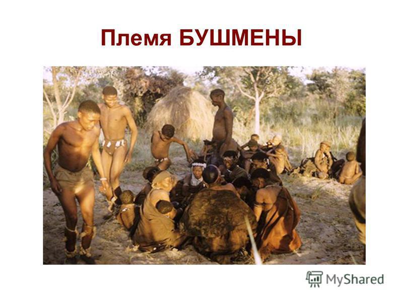 Племя БУШМЕНЫ