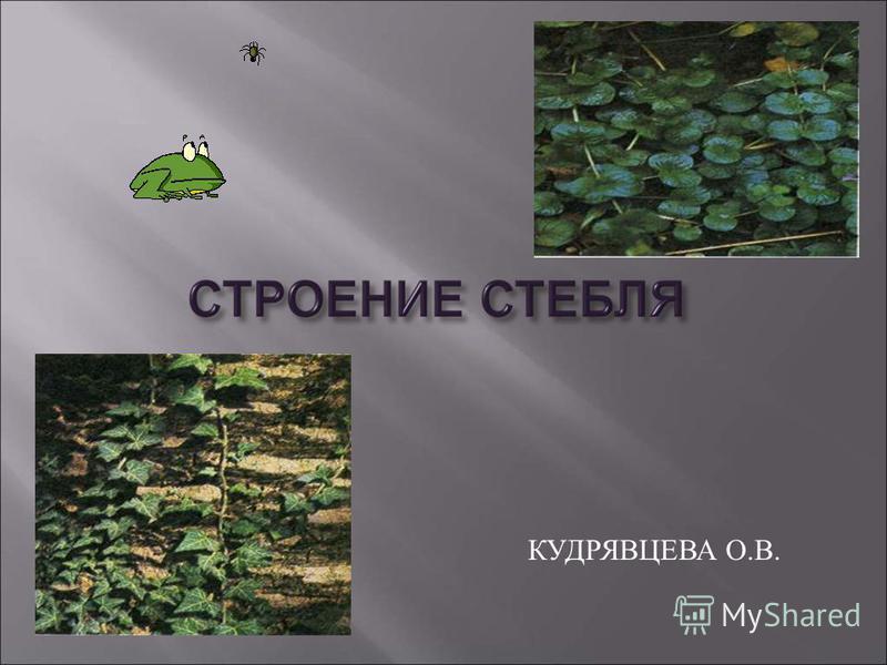 КУДРЯВЦЕВА О. В.