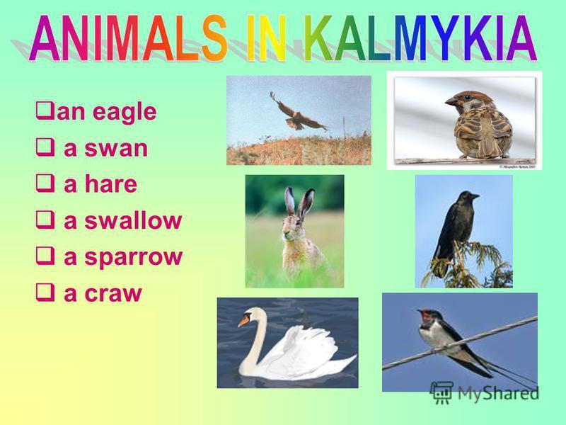 an eagle a swan a hare a swallow a sparrow a craw