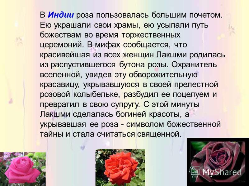 Греки считали розу даром богов. По словам Анакреона, роза родилась из белоснежной пены, покрывавшей тело Афродиты, когда богиня любви вышла из моря. Увидев этот цветок, очарованные боги обрызгали его нектаром, который и придал ему чудный аромат. Жриц