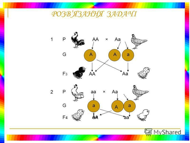 РОЗВЯЗАННЯ ЗАДАЧІ Дано: А – Чорні а – Білі Аа – Крапчасті F 3, F 4 - ? РАА × аа GАа F1F1 Аа× Аа G АаАа F2F2 АААа аа 2) При схрещуванні чорного півня з білою куркою – в першому поколінні всі курчата крапчасті, а в другому поколінні відбувається розщеп