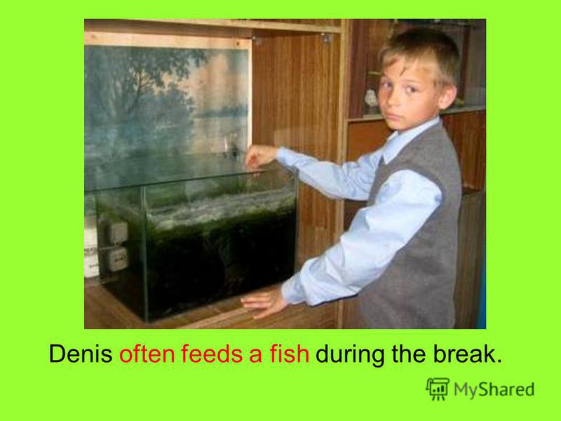Denis often feeds a fish during the break.